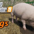 Farming simulator fs19 pigs / how to grow?