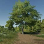 MAPLE PLACEABLE V1.0 / FS19 object