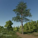 PINE CAN BE PLACED V1.0 / FS19 object