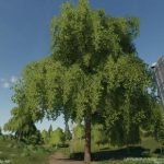 DECIDUOUS TREE PLACEABLE V1.0 / FS19 object